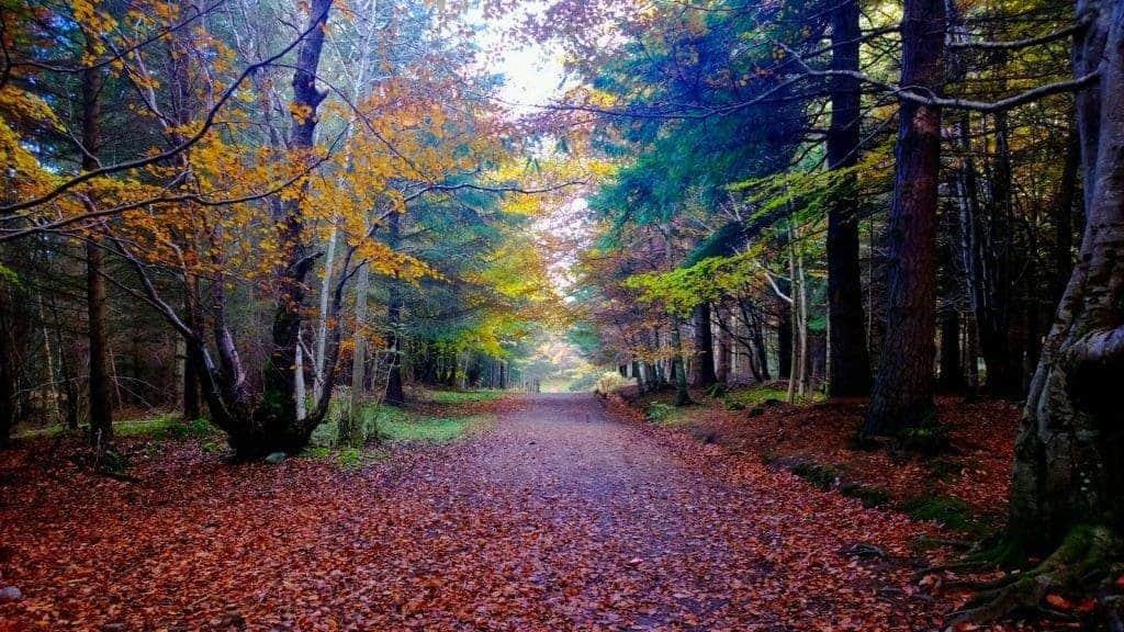 Culloden Woods