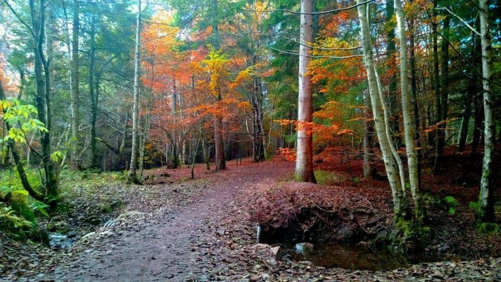 The Outlander Tour - Culloden Woods near the Clootie Well